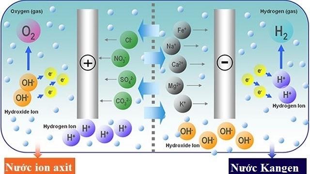 quá trình điện phân nước trong buồng điện phân của máy điện giải